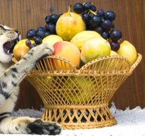 are grapes bad for cats