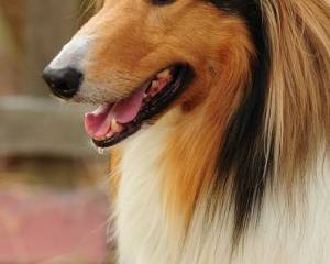 brain cancer in dogs