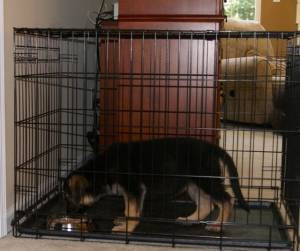 cage training puppy