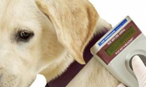 How Does Pet Microchipping Work