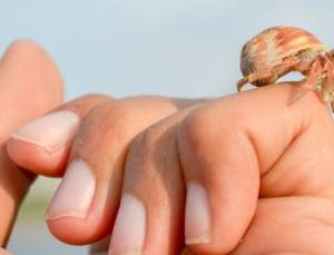 Hermit Crab as Pets: Care Guide