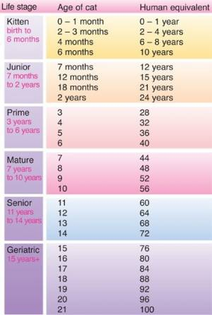 How Old is Your Cat in People Years?