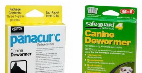 Treating Canine Parasites with Fenbendazole for Dog