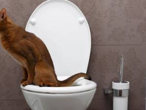 Cat Leaking Urine: Problem With Bladder Control
