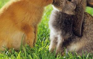 Sexing Rabbits: Male or Female?