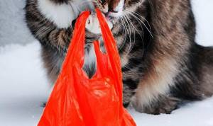 Why Do Cats Chew Plastic Bags?