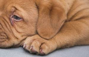 Main Signs Your Dog Is Sick