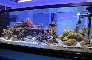 Saltwater or Reef Aquarium Refugiums: Pros and Cons