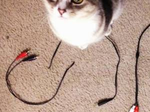 Cat Chewing on Cords: What You Can Do