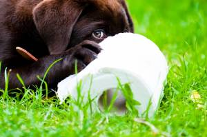 Puppies Poop: What Is Healthy and What Is Not?