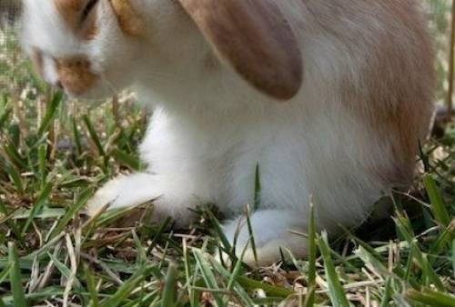 What Causes Rabbits to Have Seizures