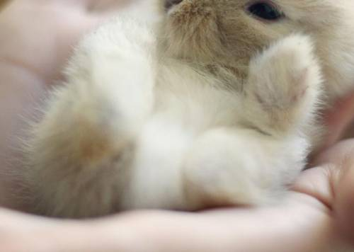 What Causes Rabbits to Eat Their Babies