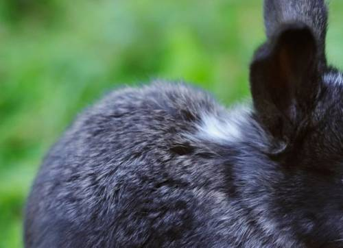 What Causes Rabbits to Change Color