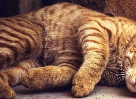 signs of pancreatitis in cats