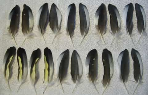 Molted Feathers