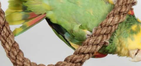how to make bird toys