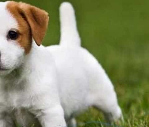 how to help a puppy with diarrhea