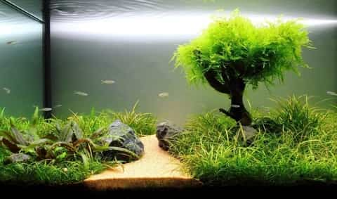 Live Plants in Fish Tank