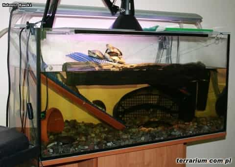 Water tank for african aquatic sideneck turtle