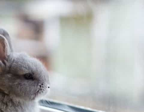 Bunny at a window