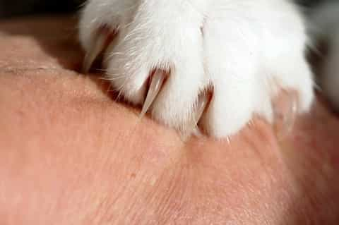 declawing cat procedure