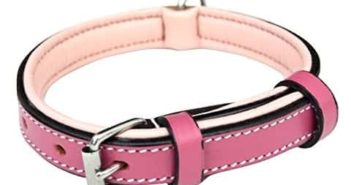 Small dog and puppy collar
