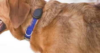GPS Tracker for Dog