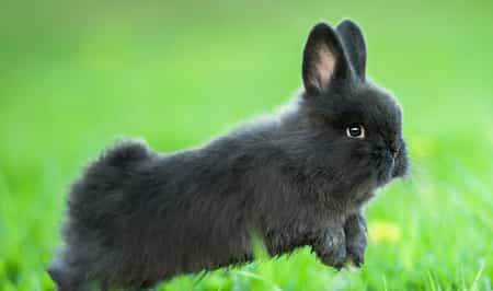 Small Rabbit Breeds