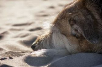 signs of kidney failure in dogs