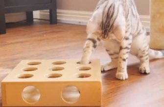 choosing best cat toy