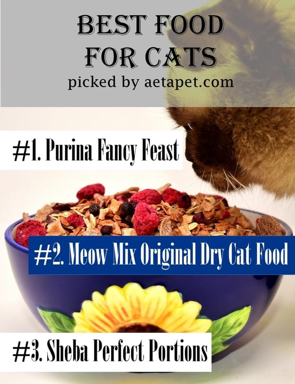 Overall the Best Cat Foods