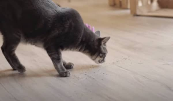 benefits of catnip for cats